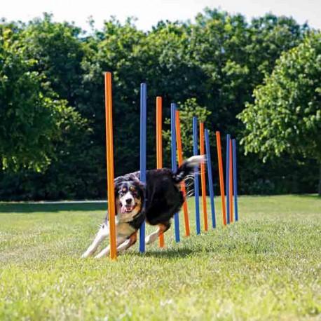 Slalom Agility Per Cani