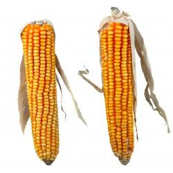 Trixie pannocchie di mais per roditori 250g