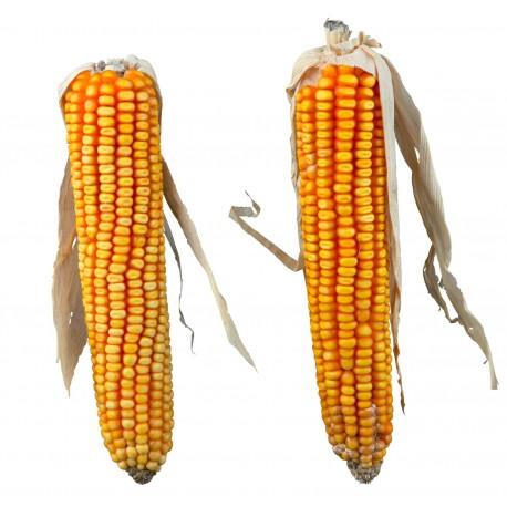Trixie pannocchie di mais per roditori
