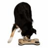 Dog Activity Game Bone